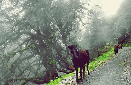 Walking Time by Jayvardhan Kandpal