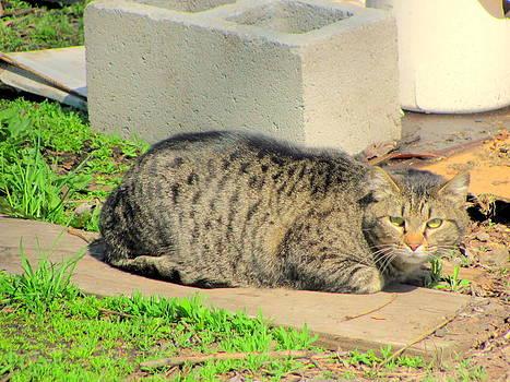 Watchful Cat by Amy Bradley