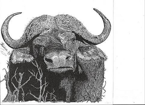 Bill Hubbard - Water Buffalo