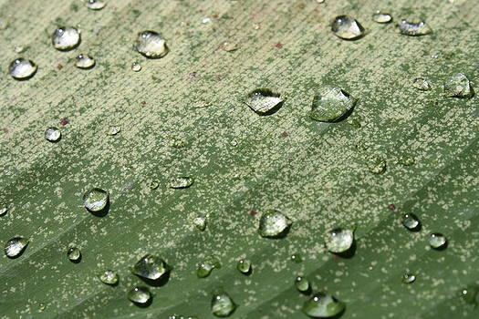 Water Drop by Gonca Yengin