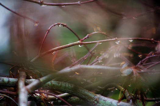 Charmian Vistaunet - Water Droplets on Twigs IV