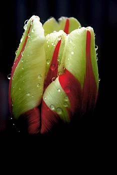 Water Drops by Bella  Shots