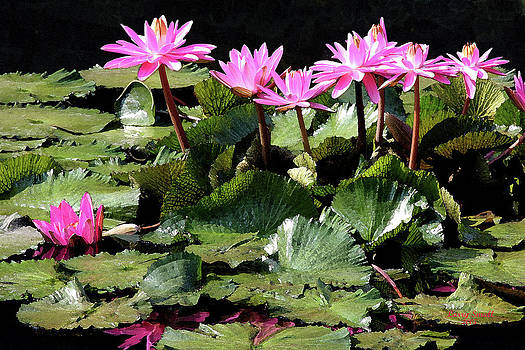 Water Lillies by Larry Small