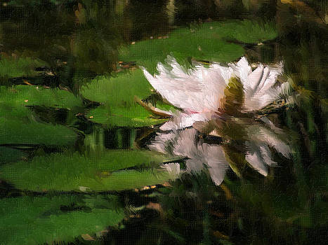 Water lilly by Heiko Mahr