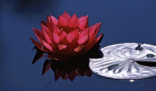 Isaac Silman - Water Lily 10