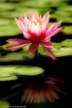 Isaac Silman - Water Lily 6
