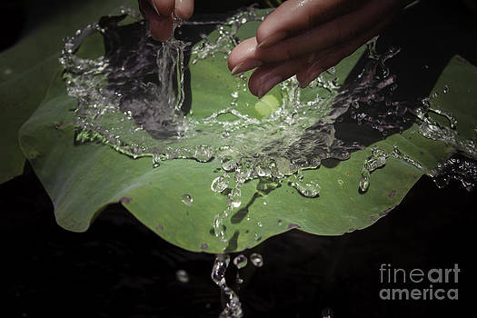Water on the lotus leave by Wittaya Uengsuwanpanich