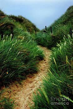 Hannes Cmarits - way through the dunes