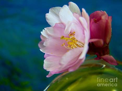Judy Via-Wolff - Weeping Cherry Blossom
