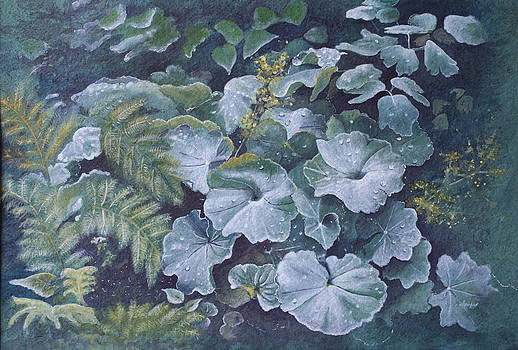 Weeping Ladies Mantle by Patsy Sharpe