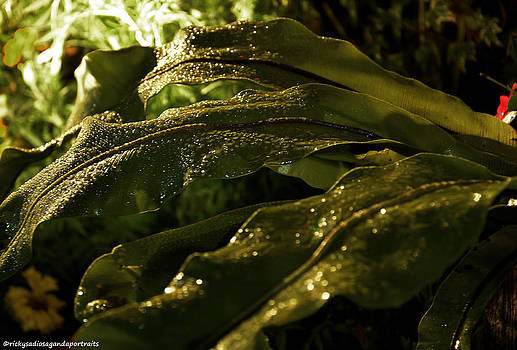 Wet Leaves 1 by Enrique Rueda