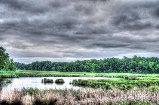 Wetlands at North Beach Maryland by Gordon H Rohrbaugh Jr