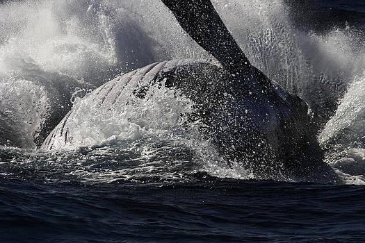 Noel Elliot - Whale Broaching
