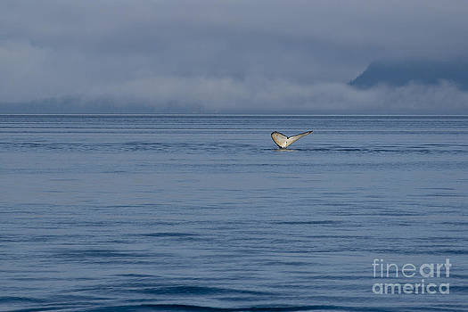 Darcy Michaelchuk - Whale Tail in Mist