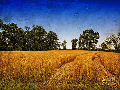 Wheatfield with Fox by Karen White