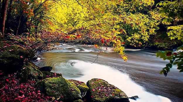 Whirlpool Canopy by Kim Shatwell-Irishphotographer