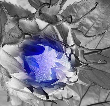 Whisper Blue by Sian Lindemann