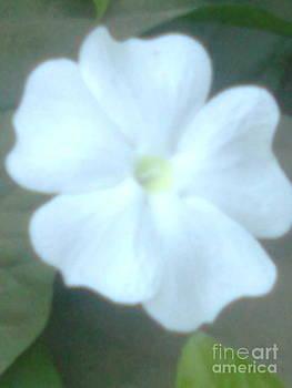 White Angle by Bgi Gadgil