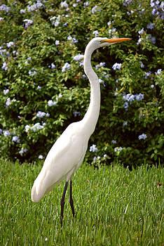 White Bird by Adele Moscaritolo