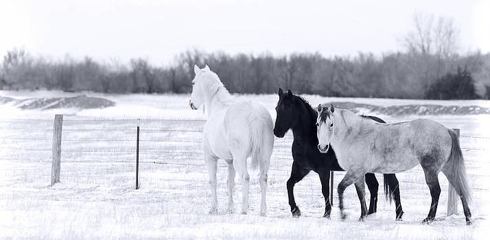 White Black and Gray by Patrick Ziegler