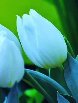 White Blossom by Lisa  DiFruscio