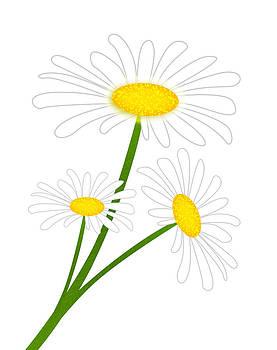 Svetlana Sewell - White Daisy