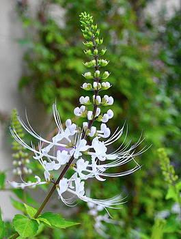 White Flower by Lori Kesten