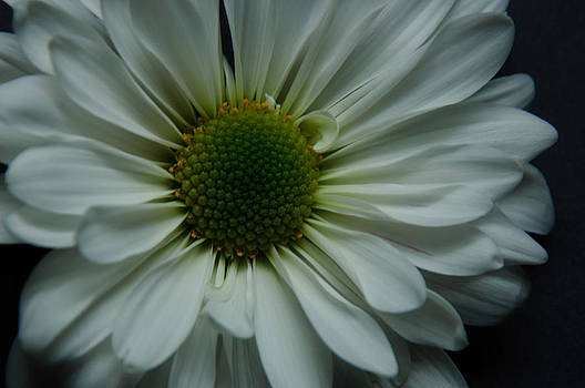 White Flower by Ron Smith