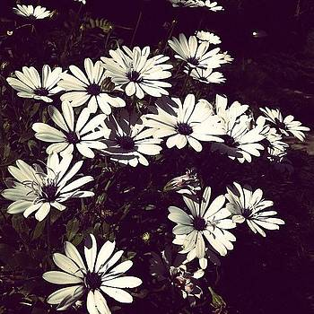 White flowers in a pb way by Dani Pimenta