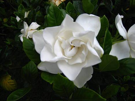 White by Gloriana Hernandez