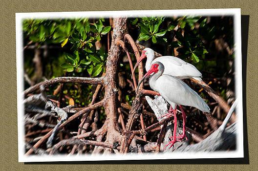 White Ibis Keepsake by Christine Stonebridge