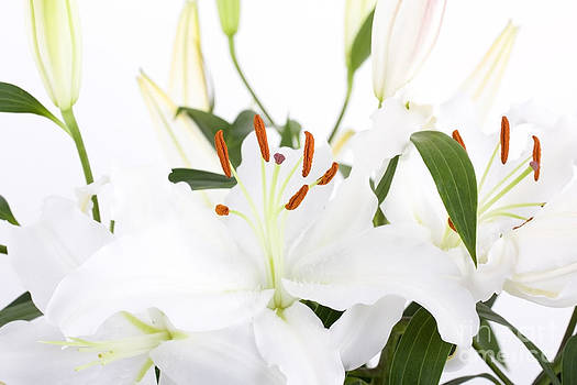 Simon Bratt Photography LRPS - White lilies and background