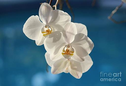 White on Blue by Theresa Willingham