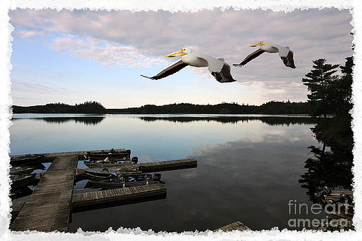 Dan Friend - White pelicans flying over docks