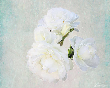 Diana Haronis - White Roses