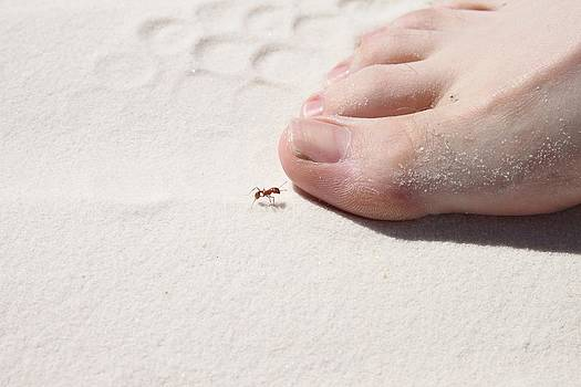 White Sand Toes by Snow  White