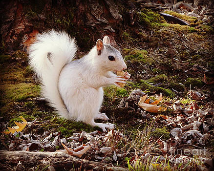 White Squirrel With Peanut by Crystal Joy Photography