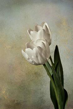 White Tulips by Shari Whittaker