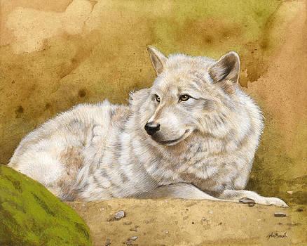 White Wolf by Peter Ambush