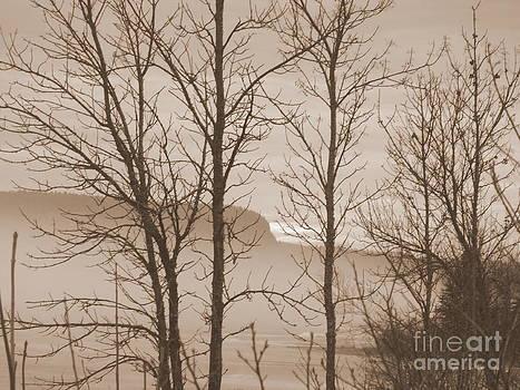 Sue Wild Rose - Whitefish Lake Through Trees