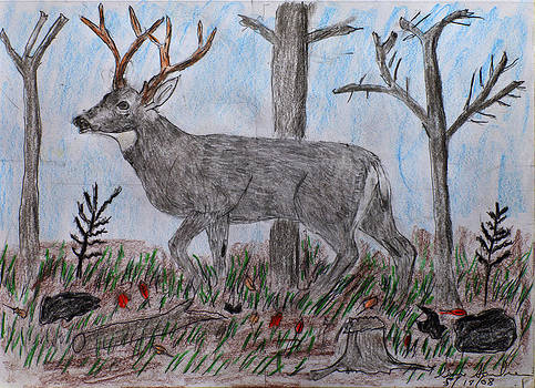 Whitetail Deer In A Meadow by Swabby Soileau