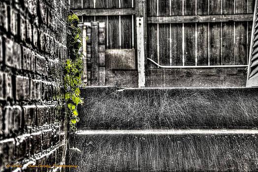 Who'll Stop The Rain by Dan Crosby