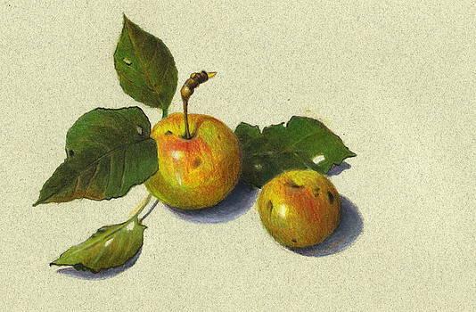Joyce Geleynse - Wild Apples in Color Pencil