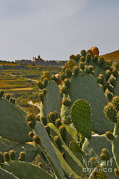 Wild Cactus 3 by Denise Wilkins