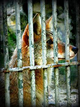 Shawna Gibson - Wild dog