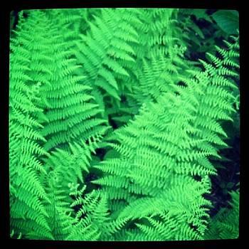 Wild Fern Leaves by Christy Bruna
