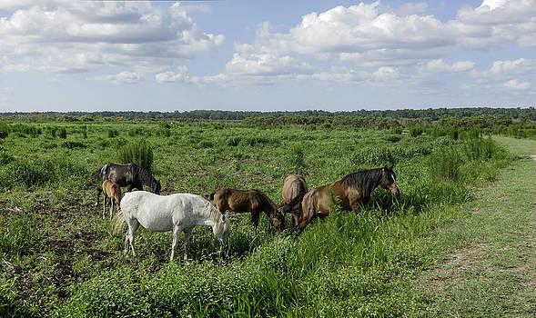 Lynn Palmer - Wild Florida Cracker Horses