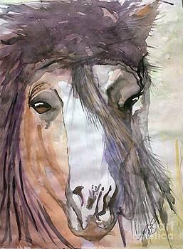 Wild Horse I. by Paula Steffensen