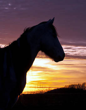 Wild Horse Sunset by Ron  McGinnis
