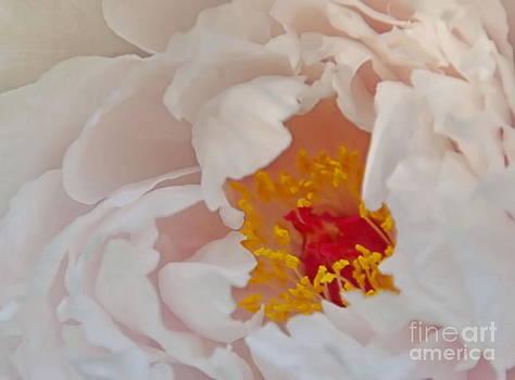Andrea Kollo - Wild Rose